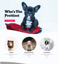 Pet grooming salon website example